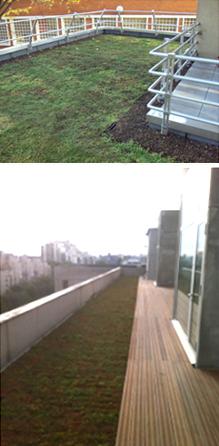 Etanchéité toiture terrasse Végétalisation